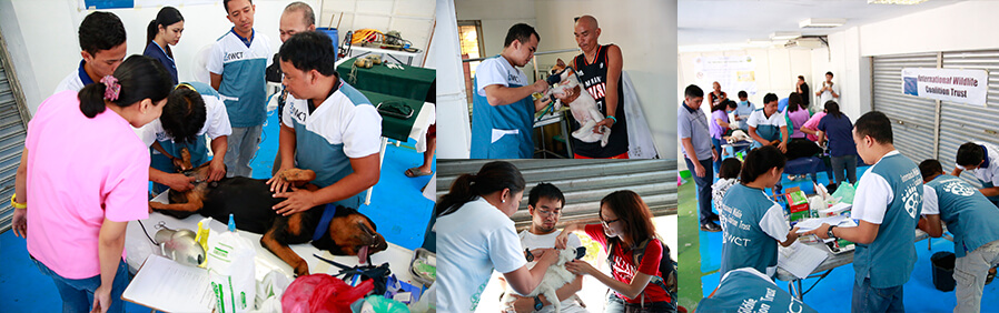 CSF provides free spay, neuter services