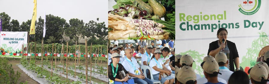 CSF partners with East West Seed to improve vegetable production